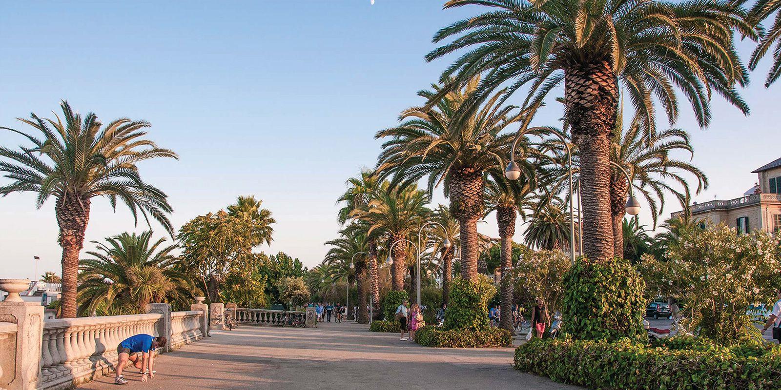 italian palm riviera san benedetto del tronto